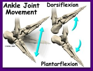 ankle_impingement_anat022